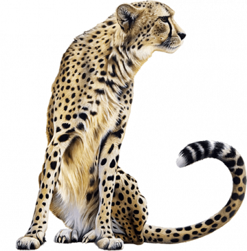 Cheetah-Sitting-2068x2000-compressor.png